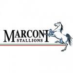 Marconi Stallions FC